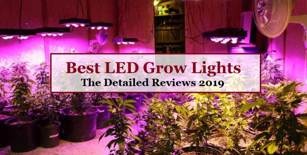 Best LED Grow Lights