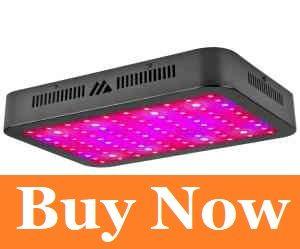 Dimgogo 1000W LED Grow Lights
